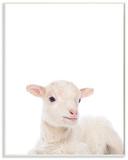 Baby Lamb Studio Photo