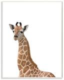 Baby Giraffe Studio Photo
