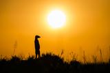Meerkat (Suricata Suricatta) Standing Alert On Hind Legs At Sunset, Makgadikgadi Pans, Botswana Papier Photo par Will Burrard-Lucas