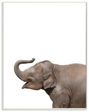 Baby Elephant Studio Photo