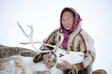 A Tundra Nenets Woman With Her -Akva- Pet Reindeer (Rangifer Tarandus)  Yar-Sale District  Yamal