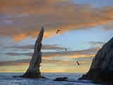 Sunset  Brown Pelicans on Rock Formation  Cabo San Lucas  Mexico