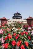 Hall of Prayer for Good Harvests in the Temple of Heaven  Beijing  China