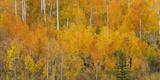 Utah  Manti-La Sal National Forest Autumn Forest Landscape