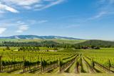 Washington State  Walla Walla Vineyard in Walla Walla