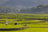 Vietnam  Thuan Chau  Rice Fields