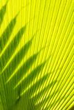 Palm Frond in Na `Aina Kai Botanical Gardens and Sculpture Park  Kauai  Hawaii