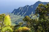 Fern at Overlook of Kalalau Valley  Napali Coast State Park Kauai  Hawaii