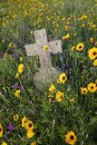 Wildflowers Blooming in Cemetery Near Rockport  Texas