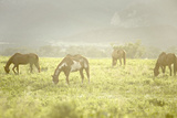 Philmont Scout Ranch Horses at Pasture before Sunset Cimarron  New Mexico