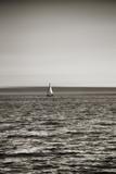 Seattle  Sailboat in Elliott Bay