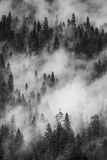 California Yosemite National Park Black and White Image of Pine Forests with Swirling Mist