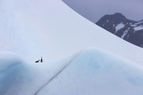 South Georgia Island Chinstrap Penguins Ride an Iceberg as it Floats by Mountain