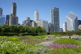 Lurie Garden in Millennium Park  Chicago  with Michigan Avenue Skyline