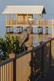 Interpretive Boardwalk at South Padre Island Birding and Nature Center