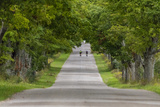 Road Bicycling under a Tunnel of Trees on Rural Road Near Glen Arbor  Michigan  Usa