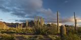 Arizona Sunset over Desert Habitat  Organ Pipe Cactus National Monument