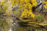 Alfred Caldwell Lily Pond in Chicago's Lincoln Park Area