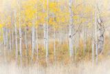 Utah  Manti-La Sal National Forest Aspen Forest Scenic