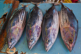 Fish for Sale at the Market Hall in Honiara  Capital of the Solomon Islands  Pacific