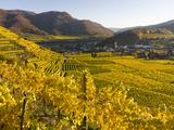 Village Spitz Nested in the Vineyards of the Wachau Austria