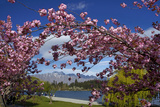 Spring Blossom  Lake Wakatipu and the Remarkables  Queenstown  Otago  South Island  New Zealand