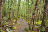 Forest in Fiordland National Park  Te Anau  New Zealand