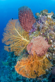 Indonesia  Forgotten Islands Coral Reef Scenic