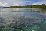 Giant Clams in the Clear Waters of the Marovo Lagoon  Solomon Islands  Pacific