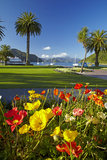 Flowers and Palm Trees  Foreshore Reserve  Picton  Marlborough Sounds  South Island  New Zealand