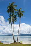 Lonely Palm Tree in the Marovo Lagoon  Solomon Islands  Pacific
