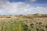 Denmark  Jutland  Hantsholm  Ww2-Era German Atlantic Wall Bunkers and Coastal Artillery