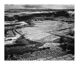 Corn Field  Indian Farm near Tuba City  Arizona  in Rain  1941