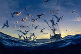 Seabirds Flock Near a Fishing Boat in the Gulf of Alaska