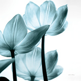 Translucent Tulips III Sq Aqua Crop Reproduction d'art par Debra Van Swearingen
