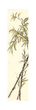 Summer Bamboo I