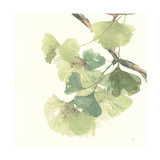 Gingko Leaves II Light