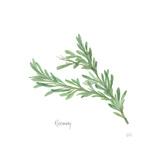 Rosemary V2