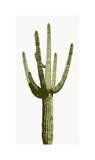 Saguaro I Giclée par Mia Jensen