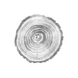 Timber Silver II Giclée par Danielle Carson
