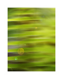 Abstract green flora