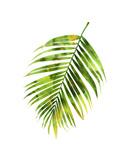 Palmier I Giclée par Melonie Miller