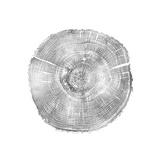 Timber Silver IV Giclée par Danielle Carson