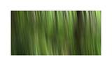 Tree motion