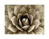 Succulent Taupe II