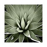 Green Succulent III Giclée par Mia Jensen