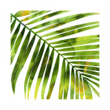 Tropical Palm I