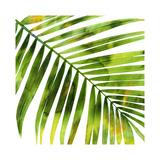 Palmier tropicalI Giclée par Melonie Miller