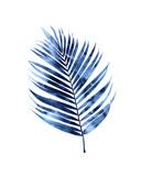 Indigo Palm I