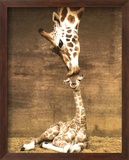 Girafe - Premier baiser Reproduction encadrée par Ron D'Raine